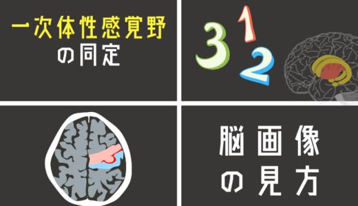脳画像から一次体性感覚野(3,1,2野)を探す方法とは?