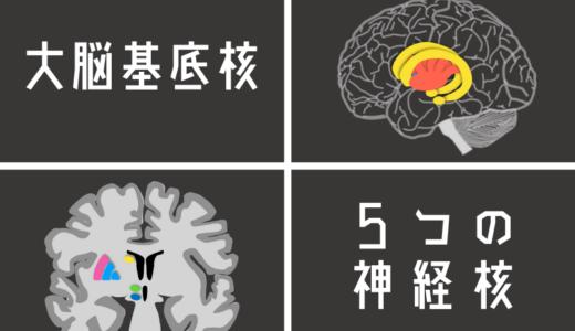 大脳基底核の機能を最もわかりやすく解説!大脳基底核を構成する5つの核の機能とは?